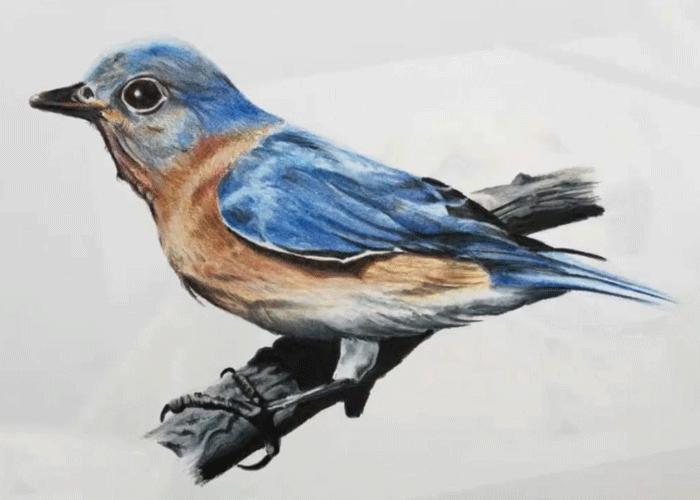 آموزش نقاشی با مدادرنگی